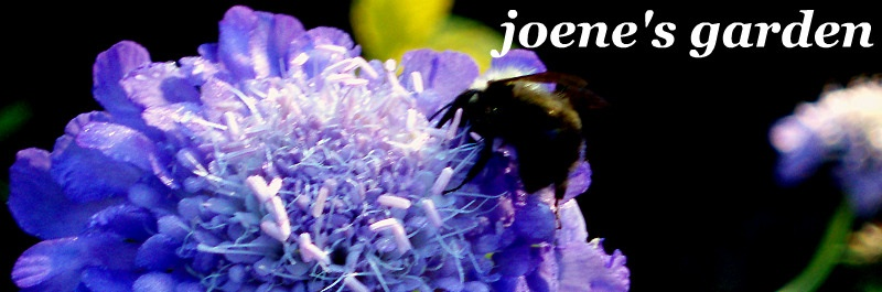 joene&#039;s garden: joene&#039;s garden